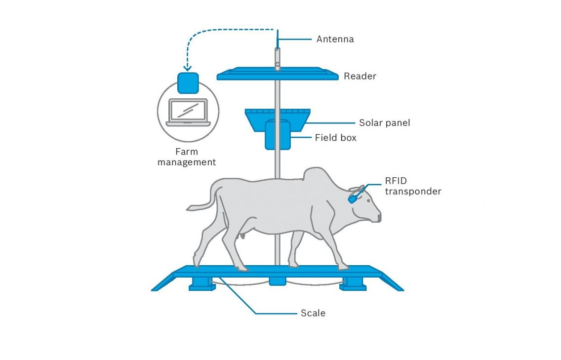 Infographic showing how the Precision Livestock Farming System works.