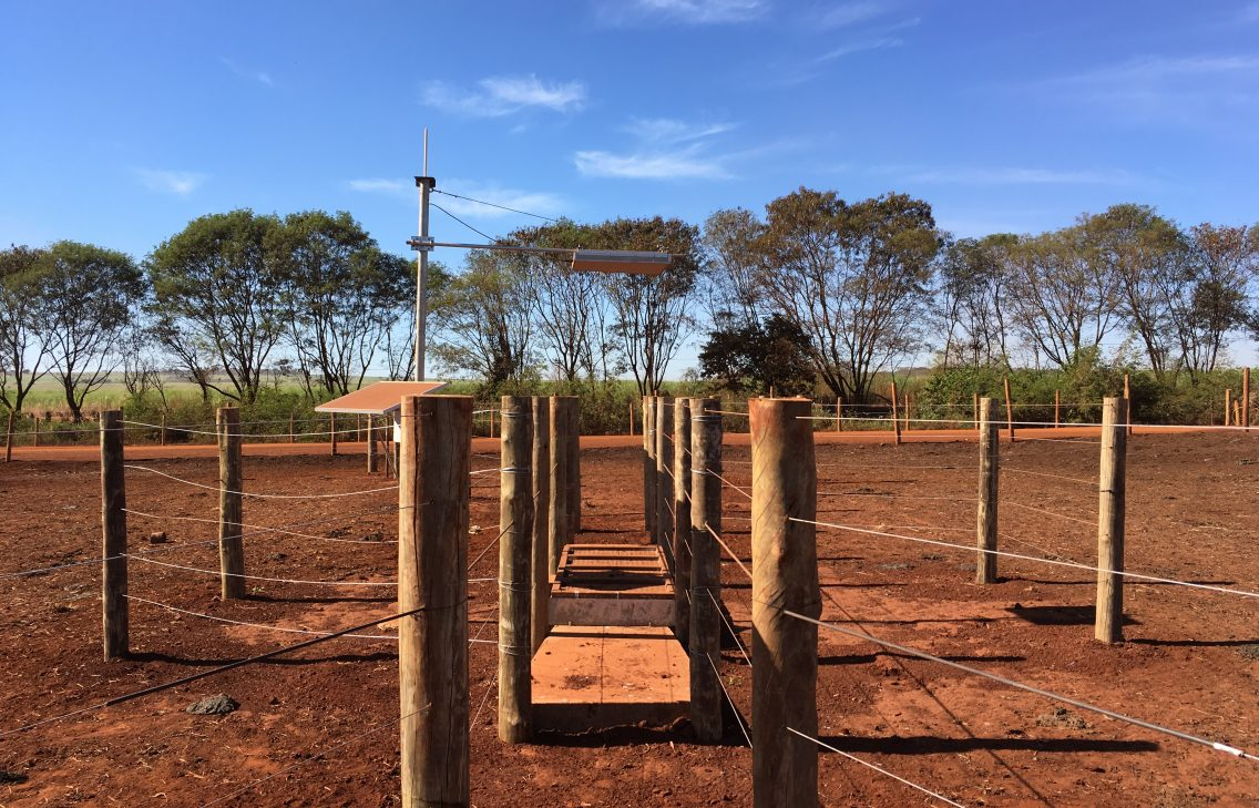 In connected agriculture cattles are weighed by a scale.