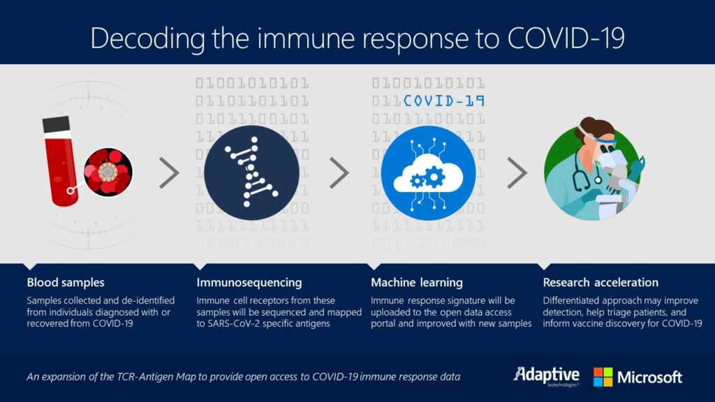 Infographic showing decoding the immune response to COVID-19